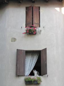 258) Grado - Katze